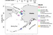 2020 Alaska Seabird Die-off Fact Sheet Posted